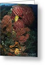 Reef Sponge Coral And Yellow Fish Greeting Card