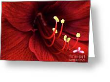 Ref Lily Greeting Card