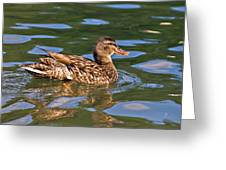 Reflected Duck Greeting Card