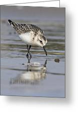 Reflection In Sand Greeting Card