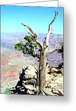 Reflection In The Canyon Greeting Card