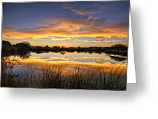 Reflections Of Gold  Greeting Card