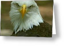 Regal Eagle Portrait Greeting Card