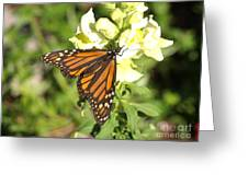 Monarch Butterfly Feeding On A Cluster Of Yellow Flowers Greeting Card