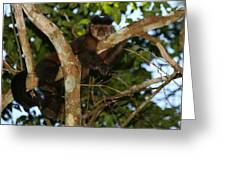Relaxed - Brown Capuchin Greeting Card