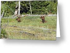 Relaxed Elk Greeting Card
