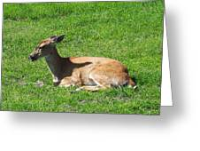 Relaxin Greeting Card