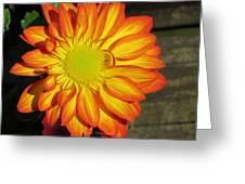 Resplendent Beauty Greeting Card