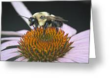 Resting Bee Squared Greeting Card