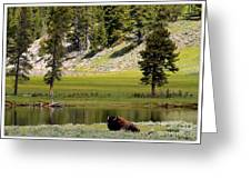 Resting Buffalo By Pond Greeting Card