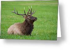Resting Elk Greeting Card