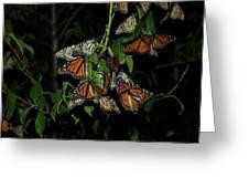 Resting Monarchs Greeting Card