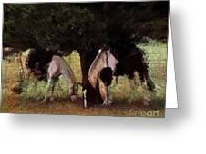 Resting On The Hoof Greeting Card