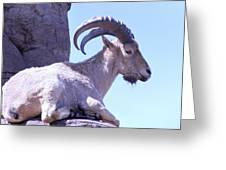 Resting Sheep Greeting Card