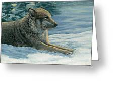 Resting Wolf Greeting Card