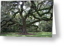 Resurrection Oak Greeting Card