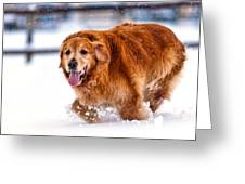 Retriever Running In Snow Greeting Card