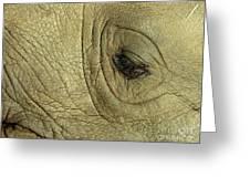 Rhino Eye Greeting Card by Marc Bittan