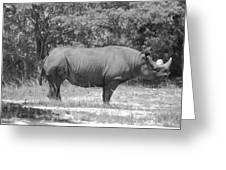Rhino In Black And White Greeting Card