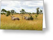 Rhino Pair Greeting Card