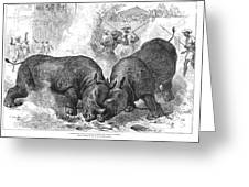 Rhinoceros Fight, 1875 Greeting Card