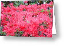 Rhodies Art Prints Pink Rhododendrons Floral Greeting Card