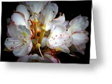 Rhododendron Explosion Greeting Card