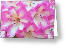 Rhododendron- Hot Pink Greeting Card
