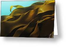 Ribbon Kelp Durvillaea Antarctica Greeting Card