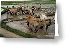 Rice Cultivation Greeting Card