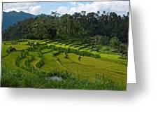 Rice Fields In Agricultural Bali Greeting Card