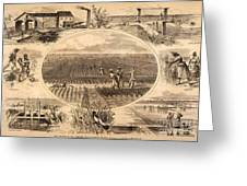 Rice Plantation, 1866 Greeting Card