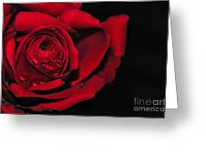 Rich Red Rose Greeting Card