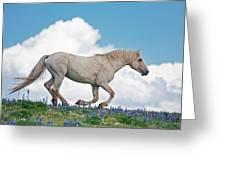 Ridgetop Gallop Greeting Card