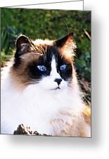 Rikki Blue Eyes Greeting Card