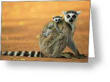 Ring-tailed Lemur Mother And Baby Greeting Card