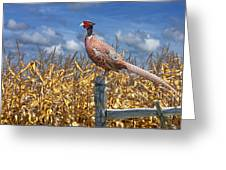 Ringneck Pheasant Greeting Card