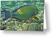 Ringtail Surgeonfish Greeting Card by Michael Peychich
