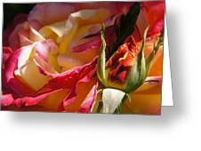 Rio Samba Rose And Bud Greeting Card