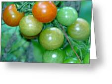 Ripen On The Vine Greeting Card