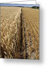 Ripened Wheat And Stubble In Saskatchewan Field Greeting Card