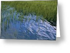 Rippling Water Among Aquatic Grasses Greeting Card