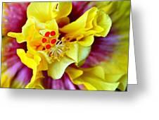 Rise And Shine Hula Girl Greeting Card