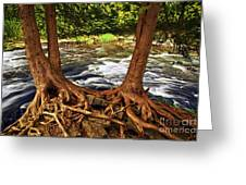 River And Roots Greeting Card