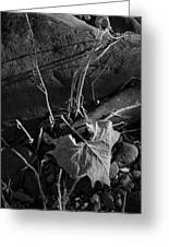River Bed Sycamore Leaf Greeting Card