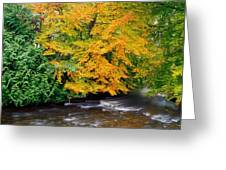 River Camcor In The Fall  Co Offaly Greeting Card