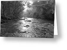 River Gaze Greeting Card