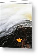 River In Fall Greeting Card