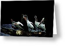 River Murray Pelicans Greeting Card