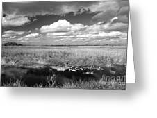 River Of Grass - The Everglades Greeting Card